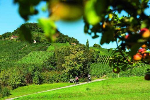 Steigerwald in Bayern