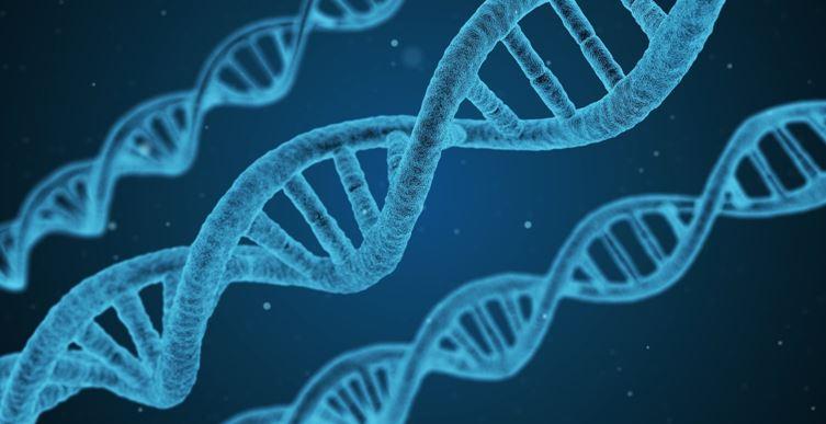 INDIVIDUELLE GENETIK BEEINFLUSST DARMFLORA