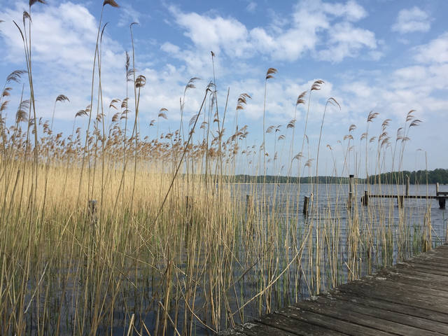 Mit Leichtigkeit zu mehr Gelassenheit: Buchingerfasten auf dem Bio-Fastenhof Behm in Brandenburg - November 2020