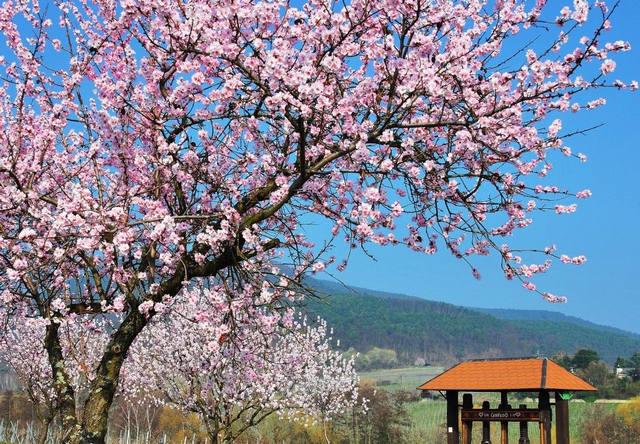 Fasten und Genuss-Wandern in der pfälzischen Toskana - März-April 2021