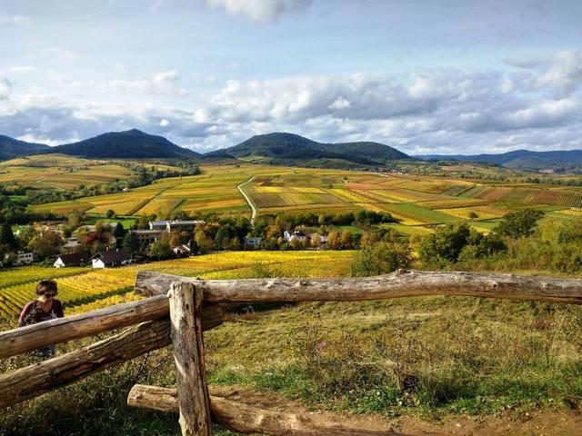 Fasten und Genuss-Wandern in der pfälzischen Toskana - auch Frischkost oder basische Vitalkost wählbar